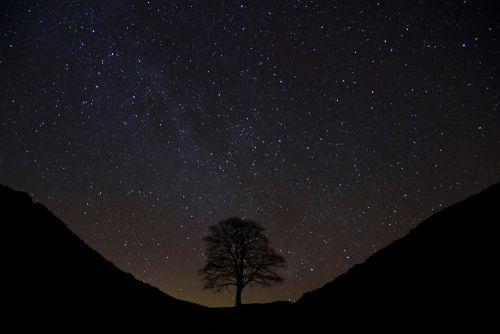 Tree silhouette against a dark stary sky
